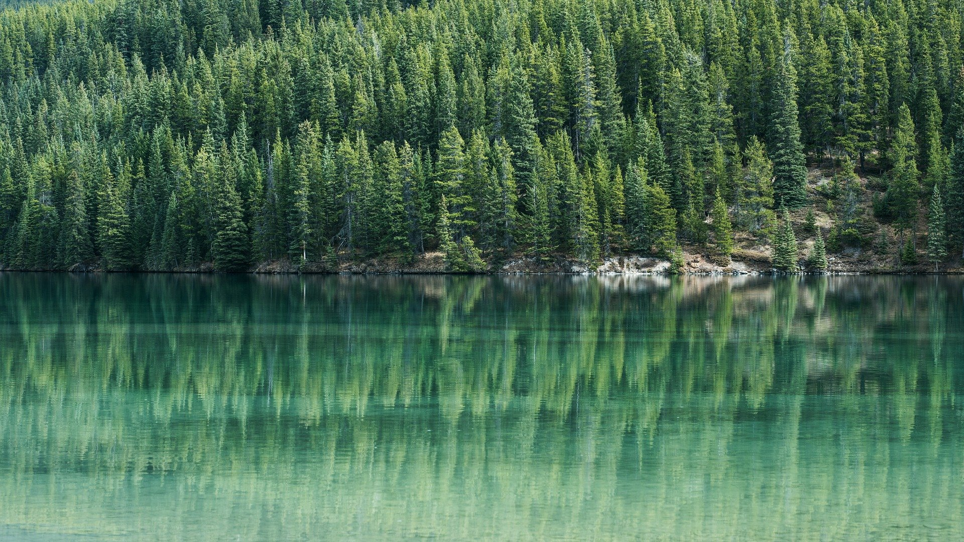 Why you should have an evergreen content strategy